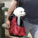 Pet Carrier Photography